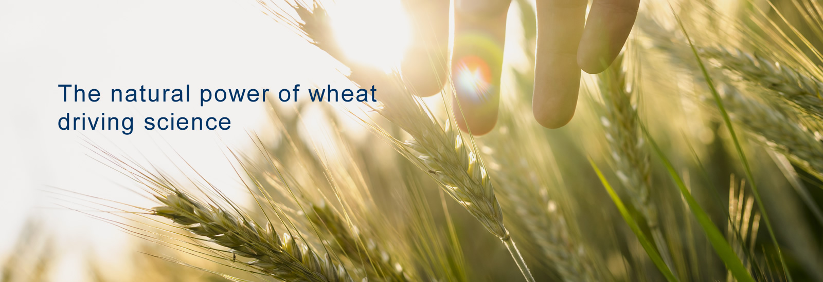The natural power of wheat driving science